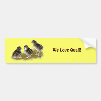 Coturnix Quail Chicks Bumper Sticker