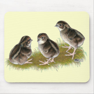 Coturnix Quail Chicks Mouse Pad