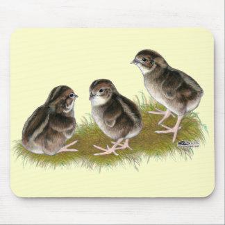 Coturnix Quail Chicks Mousepads