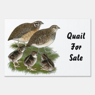 Coturnix Quail Family Sign