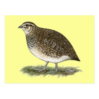 Coturnix Quail Hen Postcard