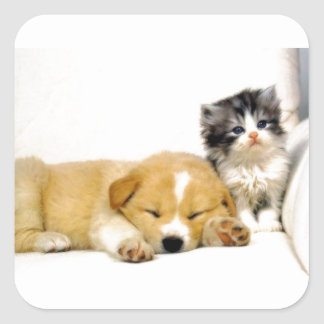 Couch-Hog Puppy Squishes Kitten Square Stickers