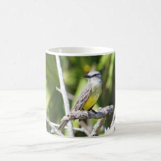 Couch's Kingbird of the Yucatan Coffee Mug