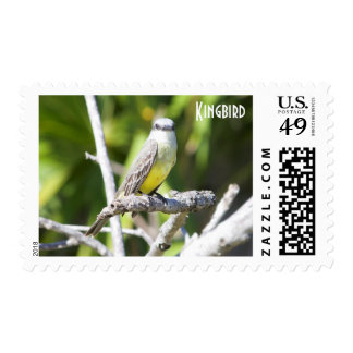 Couch's Kingbird of the Yucatan Postage Stamps
