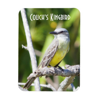 Couch's Kingbird of the Yucatan Vinyl Magnets