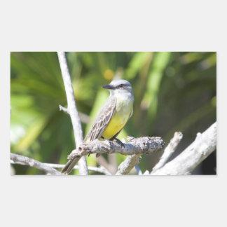 Couch's Kingbird of the Yucatan Rectangular Sticker