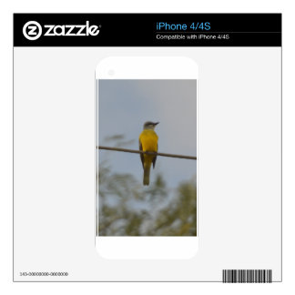 Couch's Kingbird Bird Nature Decals For The iPhone 4S