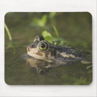 Couch's Spadefoot, Scaphiopus couchii, adult, 2 Mouse Pad