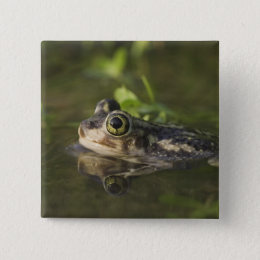 Couch's Spadefoot, Scaphiopus couchii, adult, 2 Pinback Button