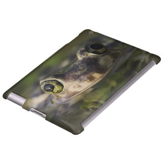 Couch's Spadefoot, Scaphiopus couchii, adult, Apple Ipad234 Case