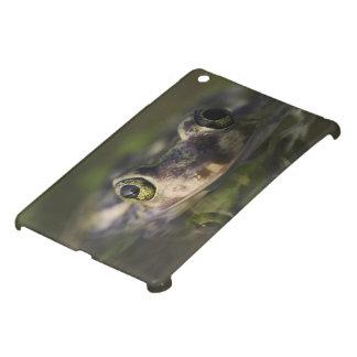 Couch's Spadefoot, Scaphiopus couchii, adult, iPad Mini Cases