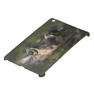 Couch's Spadefoot, Scaphiopus couchii, adult, Case For The iPad Mini