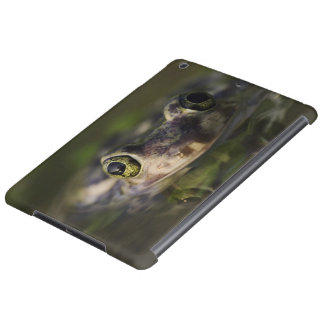 Couch's Spadefoot, Scaphiopus couchii, adult, Cover For iPad Air
