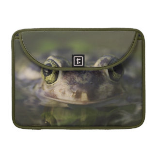 Couch's Spadefoot, Scaphiopus couchii, adult, Sleeve For MacBook Pro