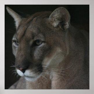 Cougar 004 poster