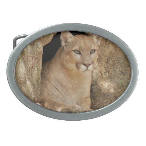 Cougar 011 oval belt buckle