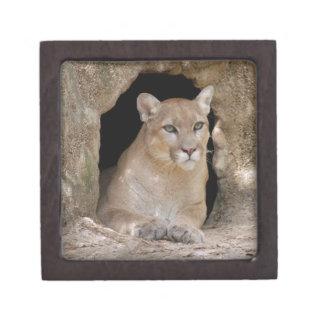 Cougar 012 keepsake box