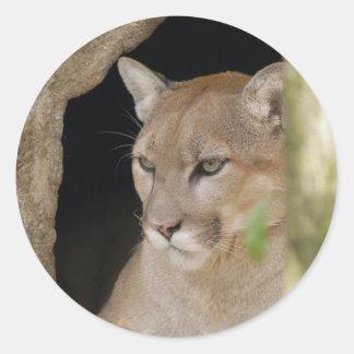 Cougar 013 classic round sticker