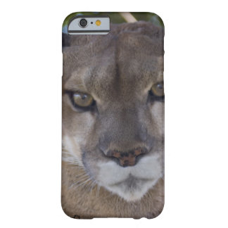 Cougar Barely There iPhone 6 Case