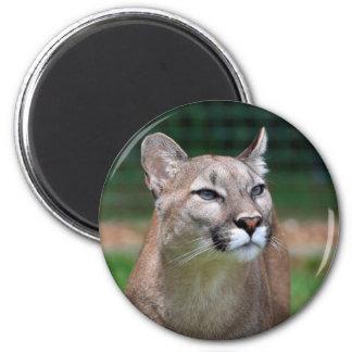Cougar beautiful photo fridge magnet, gift magnet