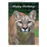 Cougar beautiful photo happy birthday card