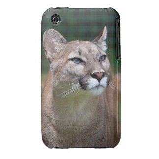 Cougar beautiful photo iphone 3G case mate barely