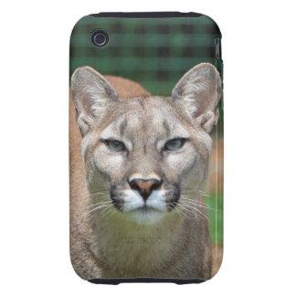Cougar beautiful photo iphone 3G case mate tough