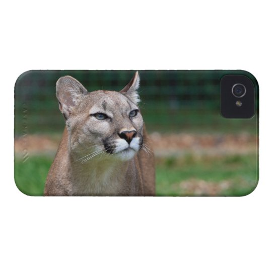 Cougar beautiful photo iphone 4 case mate barely