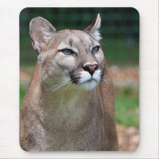 Cougar beautiful photo mousemat, mousepad
