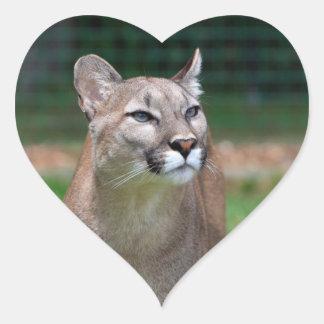 Cougar beautiful photo sticker, stickers, gift heart sticker