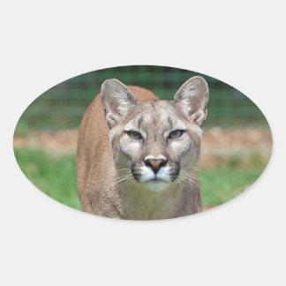 Cougar beautiful photo sticker, stickers, gift oval sticker