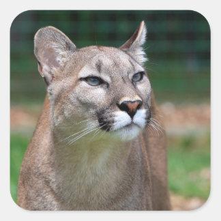 Cougar beautiful photo sticker, stickers, gift square sticker
