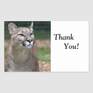 Cougar beautiful photo thank you sticker, stickers