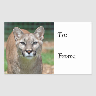 Cougar beautiful photo to, from sticker, stickers