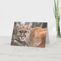 Cougar Big Cat Notecard