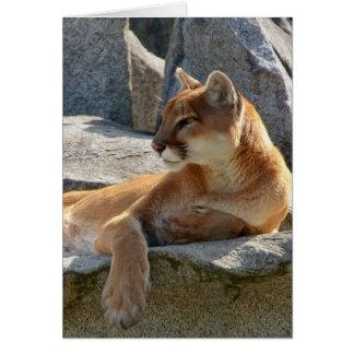Cougar Close Up Card