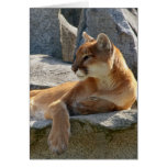 Cougar Close Up Stationery Note Card
