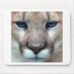 Cougar cub mouse pad