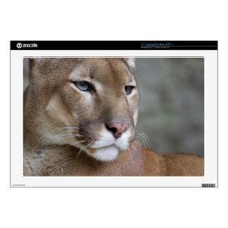 COUGAR DECALS FOR LAPTOPS