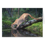 Cougar Drinking Card Greeting Cards