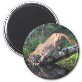Cougar Drinking Magnet