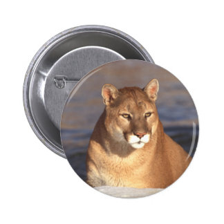 Cougar Face 2 Inch Round Button