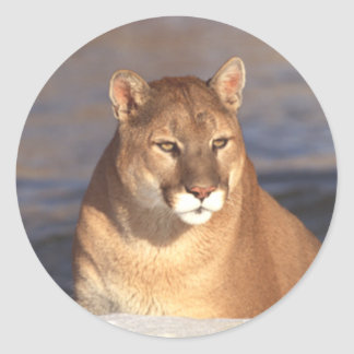 Cougar Face Classic Round Sticker
