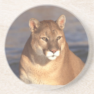 Cougar Face Coaster
