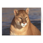 Cougar Face Greeting Card
