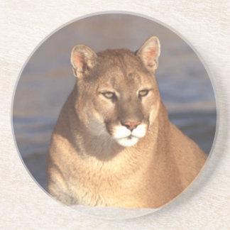 Cougar Face Sandstone Coaster