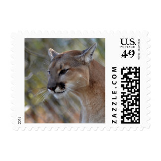 Cougar in Deep Thougt Postage