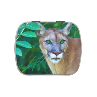 Cougar in the Jungle Jelly Belly Tins