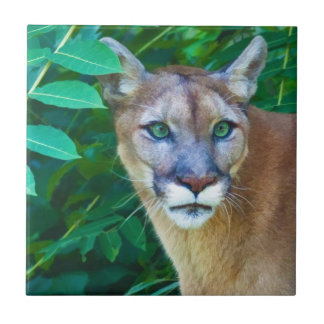 Cougar in the Jungle Tile