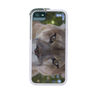 Cougar iPhone 5/5S Cases